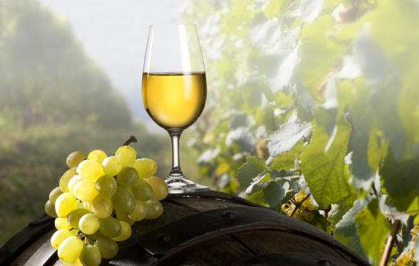 bianchello-del-metauro-bicchiere