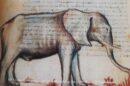 Parliamo dell'elefante….